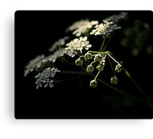 Spring through the shadows Canvas Print