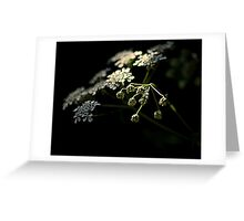 Spring through the shadows Greeting Card