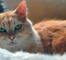 Relaxed  cat after  his  bath by Jane  mcainsh