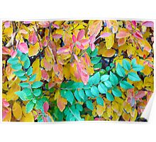 Background of vivid red and green autumn bush leaves Poster