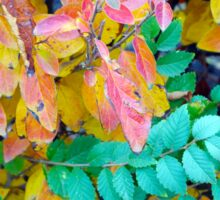 Background of vivid red and green autumn bush leaves Sticker