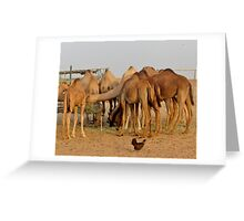 Dubai - Camels in the Desert Greeting Card