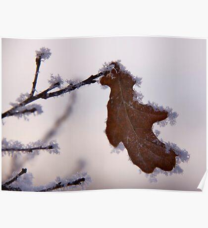 Gingerbread leaf Poster