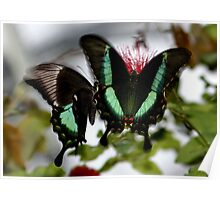 In a Flutter Poster