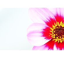 Pink 2 Photographic Print