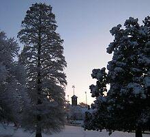 Feb. 19 2012 Snowstorm 74 by dge357
