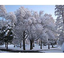 Feb. 19 2012 Snowstorm 78 Photographic Print