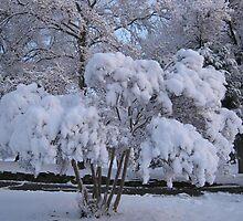 Feb. 19 2012 Snowstorm 79 by dge357
