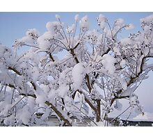 Feb. 19 2012 Snowstorm 93 Photographic Print