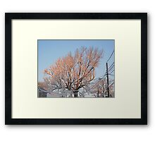 Feb. 19 2012 Snowstorm 101 Framed Print