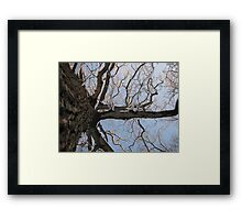 Feb. 19 2012 Snowstorm 105 Framed Print