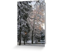 Feb. 19 2012 Snowstorm 106 Greeting Card