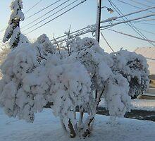 Feb. 19 2012 Snowstorm 113 by dge357