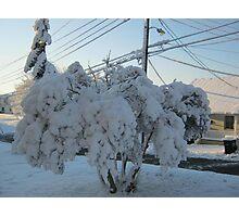 Feb. 19 2012 Snowstorm 113 Photographic Print