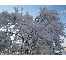 Feb. 19 2012 Snowstorm 116 Photographic Print