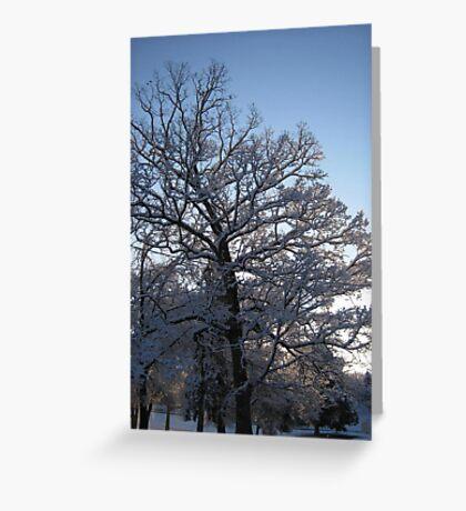 Feb. 19 2012 Snowstorm 118 Greeting Card