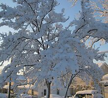 Feb. 19 2012 Snowstorm 119 by dge357