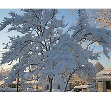 Feb. 19 2012 Snowstorm 119 Photographic Print