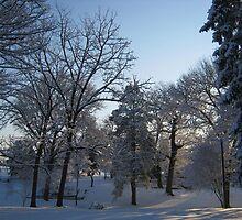 Feb. 19 2012 Snowstorm 121 by dge357