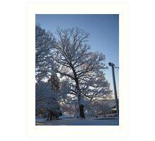 Feb. 19 2012 Snowstorm 122 Art Print