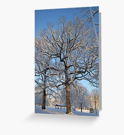 Feb. 19 2012 Snowstorm 128 Greeting Card
