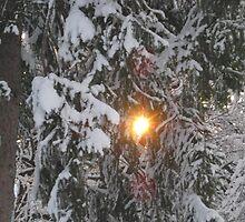 Feb. 19 2012 Snowstorm 129 by dge357