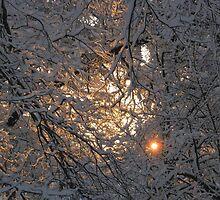Feb. 19 2012 Snowstorm 130 by dge357