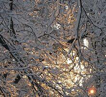 Feb. 19 2012 Snowstorm 131 by dge357