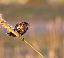 What Kind of Bird is this by Paul Gana
