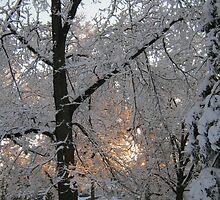 Feb. 19 2012 Snowstorm 132 by dge357