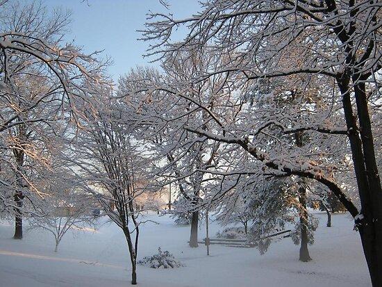 Feb. 19 2012 Snowstorm 134 by dge357