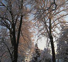 Feb. 19 2012 Snowstorm 135 by dge357