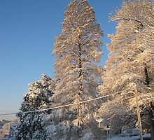 Feb. 19 2012 Snowstorm 140 by dge357