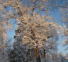 Feb. 19 2012 Snowstorm 144 by dge357
