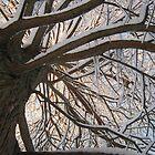 Feb. 19 2012 Snowstorm 147 by dge357