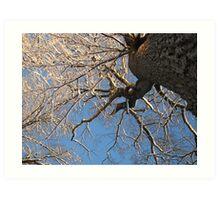 Feb. 19 2012 Snowstorm 149 Art Print