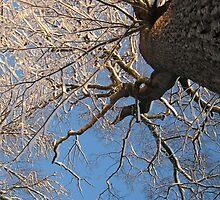 Feb. 19 2012 Snowstorm 149 by dge357