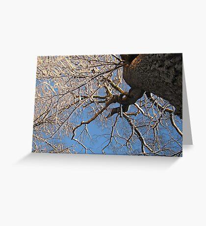 Feb. 19 2012 Snowstorm 149 Greeting Card