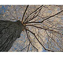 Feb. 19 2012 Snowstorm 153 Photographic Print