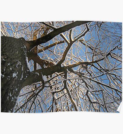 Feb. 19 2012 Snowstorm 158 Poster