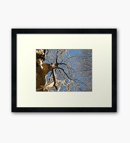 Feb. 19 2012 Snowstorm 159 Framed Print