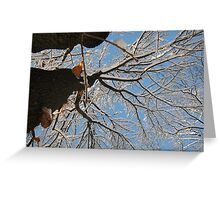 Feb. 19 2012 Snowstorm 160 Greeting Card