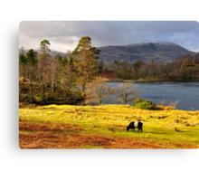 Tarn Hows, Lake District.. Canvas Print