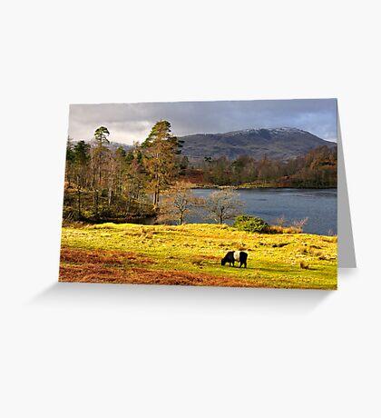 Tarn Hows, Lake District.. Greeting Card