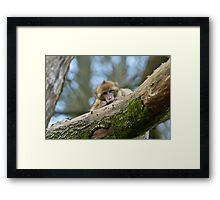 Who is watching who? Framed Print