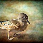 Lovely Lady - Wood Duck by KBritt