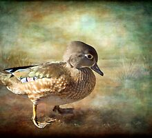 Lovely Lady - Wood Duck by KBritt