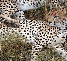 Spotted Sprawling by bhavini