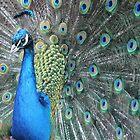 Blue by Dallas Kempfle