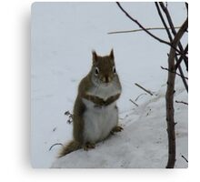 So...about those nuts you mentioned.. Canvas Print